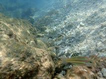 Διαφορετικά ψάρια κοντά στους οργανισμούς κοραλλιών Στοκ φωτογραφία με δικαίωμα ελεύθερης χρήσης
