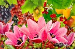 Διαφορετικά όμορφα λουλούδια στην κινηματογράφηση σε πρώτο πλάνο κήπων Στοκ εικόνα με δικαίωμα ελεύθερης χρήσης
