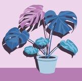 Διαφορετικά houseplants στο ενιαίο πράσινο δοχείο στο ρόδινο τοίχο ελεύθερη απεικόνιση δικαιώματος