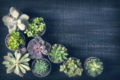 Διαφορετικά succulents Στοκ φωτογραφία με δικαίωμα ελεύθερης χρήσης