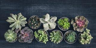 Διαφορετικά succulents Στοκ Φωτογραφία