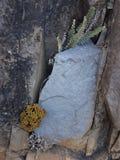 Διαφορετικές άσπρες λουλούδια και πέτρα στοκ εικόνα