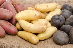 Διαφορετικές ποικιλίες των πατατών burlap Στοκ εικόνα με δικαίωμα ελεύθερης χρήσης