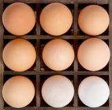 διαφορετικές σκιές αυγών ποικιλομορφίας έννοιας στοκ εικόνες με δικαίωμα ελεύθερης χρήσης