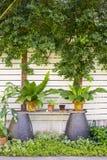 Διαφορετικές όμορφες φρέσκες πράσινες σε δοχείο εγκαταστάσεις στο καθιερώνον τη μόδα trop Στοκ Εικόνα