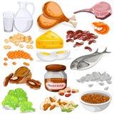 Διαφορετική συλλογή τροφίμων πηγών λευκώματος ελεύθερη απεικόνιση δικαιώματος