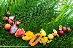 Διαφορετική τροπική έννοια διατροφής κατανάλωσης φρούτων ακατέργαστη Στοκ Φωτογραφία