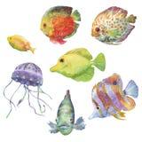 Διαφορετικοί τύποι απεικονίσεων ψαριών και μεδουσών Στοκ εικόνες με δικαίωμα ελεύθερης χρήσης