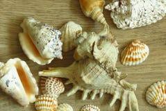 Διαφορετικοί τύποι θαλασσινών κοχυλιών στο ξύλινο πάτωμα στοκ εικόνες