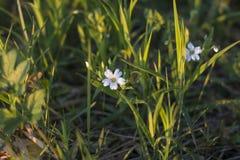 Διαφορετικοί τύποι λουλουδιών, τομέα, δασών και πάρκων στοκ φωτογραφία με δικαίωμα ελεύθερης χρήσης