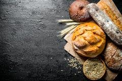 Διαφορετικοί τύποι ψωμιών με το σιτάρι και spikelets στοκ φωτογραφία με δικαίωμα ελεύθερης χρήσης