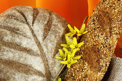 Διαφορετικοί τύποι ψωμιών darck Στοκ Φωτογραφίες