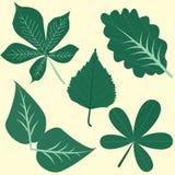 Διαφορετικός βγάζει φύλλα στην τέχνη συνδετήρων Στοκ Φωτογραφία