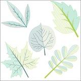 Διαφορετικός βγάζει φύλλα στην τέχνη συνδετήρων Στοκ Φωτογραφίες