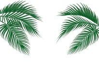 Διαφορετικός στα τροπικά σκούρο πράσινο φύλλα φοινικών μορφής και στις δύο πλευρές η ανασκόπηση απομόνωσε το λευκό απεικόνιση Στοκ φωτογραφία με δικαίωμα ελεύθερης χρήσης