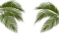 Διαφορετικός στα τροπικά σκούρο πράσινο φύλλα φοινικών μορφής και στις δύο πλευρές Απομονωμένος στο άσπρο υπόβαθρο χωρίς ένα πλέγ Στοκ εικόνα με δικαίωμα ελεύθερης χρήσης