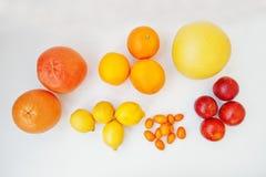 Διαφορετικός τύπος εσπεριδοειδών Εξωτικό κουμκουάτ φρούτων με το πορτοκάλι, lemo Στοκ Εικόνα