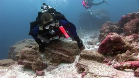 Διαφορετικός υποβρύχιος σκαφάνδρων στο υπόβαθρο του βυθού φιλμ μικρού μήκους