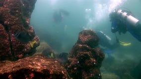 Διαφορετικός υποβρύχιος σκαφάνδρων στο υπόβαθρο των σχολικών ψαριών Galapagos φιλμ μικρού μήκους