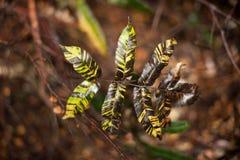 Διαφοροποιημένο φυτό φύλλων Στοκ φωτογραφίες με δικαίωμα ελεύθερης χρήσης