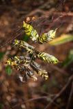 Διαφοροποιημένο φυτό φύλλων Στοκ Φωτογραφίες