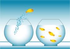 Διαφυγή ψαριών Στοκ Εικόνες