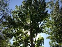 Διαφωτισμένο δέντρο Στοκ φωτογραφία με δικαίωμα ελεύθερης χρήσης