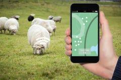 Διαδίκτυο των πραγμάτων στη γεωργία Στοκ Φωτογραφίες