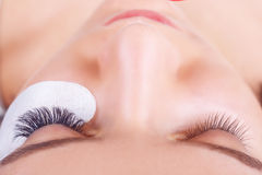Διαδικασία επέκτασης Eyelash Μάτι γυναικών με τα μακροχρόνια eyelashes Τα μαστίγια, κλείνουν επάνω, επιλεγμένη εστίαση στοκ φωτογραφία με δικαίωμα ελεύθερης χρήσης