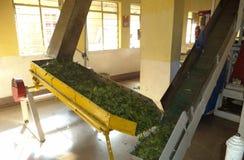 Διαδικασία παραγωγής τσαγιού, Munnar, Κεράλα, Ινδία Στοκ φωτογραφία με δικαίωμα ελεύθερης χρήσης
