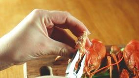 Διαδικασία της κατανάλωσης ενός αστακού, αστακός απόθεμα βίντεο