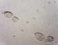 Διαδρομές πουλιών στην άμμο μιας παραλίας που διασχίζει τα ανθρώπινα ίχνη. στοκ εικόνες