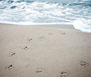 Διαδρομές πουλιών στην άμμο μιας παραλίας. στοκ εικόνες