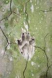 Διαδρομές σκυλιών στη ραγισμένη λάσπη Στοκ φωτογραφία με δικαίωμα ελεύθερης χρήσης