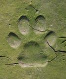 Διαδρομές σκυλιών στη ραγισμένη λάσπη Στοκ Φωτογραφία
