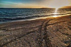 Διαδρομή ροδών στην άμμο Στοκ Φωτογραφίες