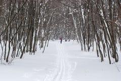 Διαδρομή σκι στο χειμερινό ξύλο στοκ εικόνα