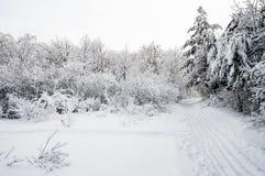Διαδρομή σκι στο χιονώδες δάσος Στοκ Φωτογραφίες