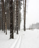 Διαδρομή σκι Στοκ εικόνα με δικαίωμα ελεύθερης χρήσης