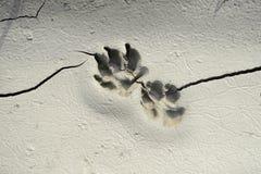 Διαδρομή σκυλιών στη λάσπη Στοκ Φωτογραφίες