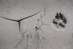 Διαδρομή σκυλιών στη λάσπη Στοκ φωτογραφία με δικαίωμα ελεύθερης χρήσης
