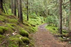Διαδρομή στο δάσος Στοκ Εικόνες