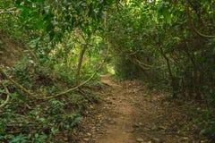 Διαδρομή στο βαθύ δάσος για την οδοιπορία στοκ εικόνες με δικαίωμα ελεύθερης χρήσης