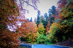 Διαδρομή φθινοπώρου Στοκ Εικόνες