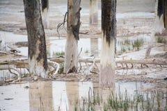 Διαλυμένος φλοιός δέντρων Στοκ Φωτογραφία