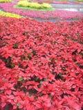 Διεθνές φυτοκομικό Expositionï ¼ λουλούδι  της Κίνας Jinzhou Στοκ Εικόνες