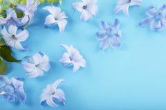 Διεσπαρμένα μπλε άνθη υάκινθων Στοκ φωτογραφία με δικαίωμα ελεύθερης χρήσης