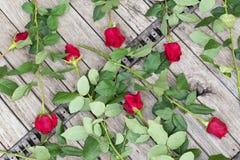 Διεσπαρμένα τριαντάφυλλα στο ξύλινο υπόβαθρο, τοπ άποψη Στοκ Εικόνες