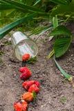 Διεσπαρμένη φράουλα από την κούπα γυαλιού στο έδαφος Στοκ εικόνα με δικαίωμα ελεύθερης χρήσης