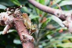 Διευθυνμένο δράκος Katydid στοκ εικόνες με δικαίωμα ελεύθερης χρήσης